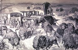 Bisonhunt by train
